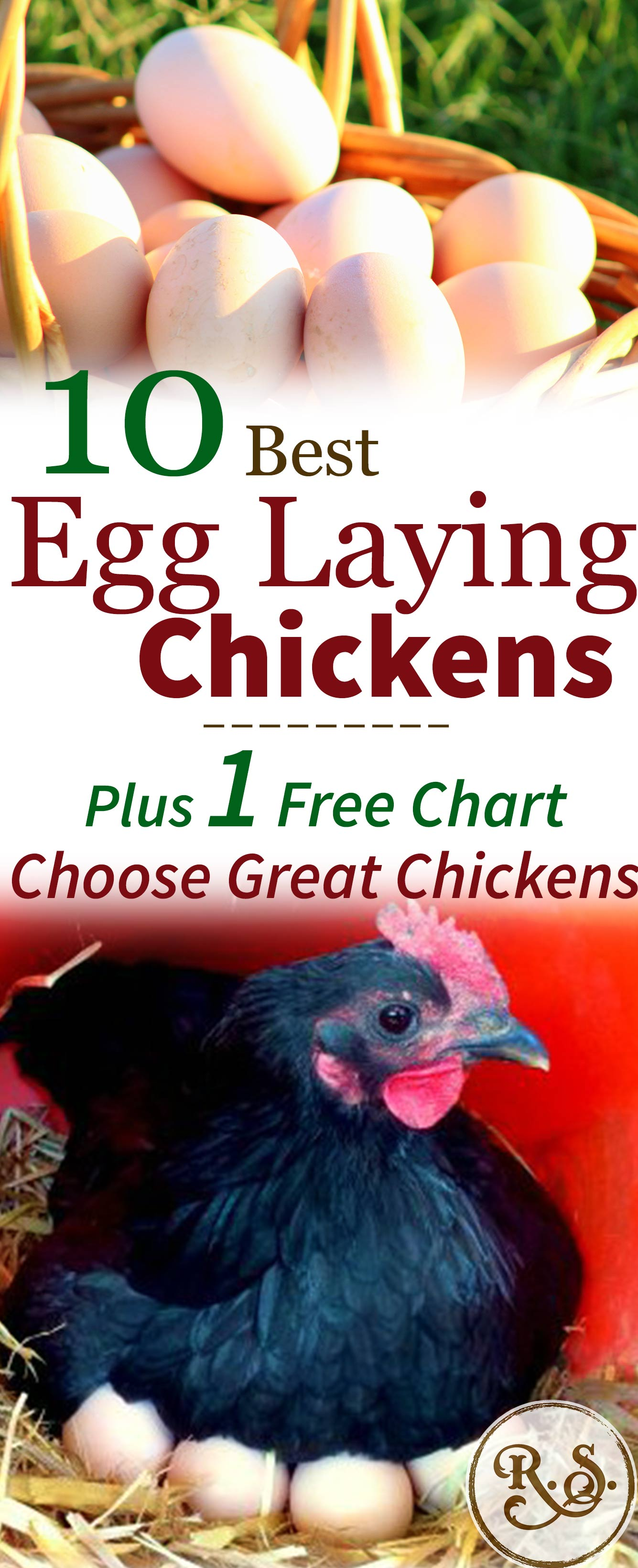 What Are The Best Egg Laying Ens Which Breeds Should You Consider When Choosing Your
