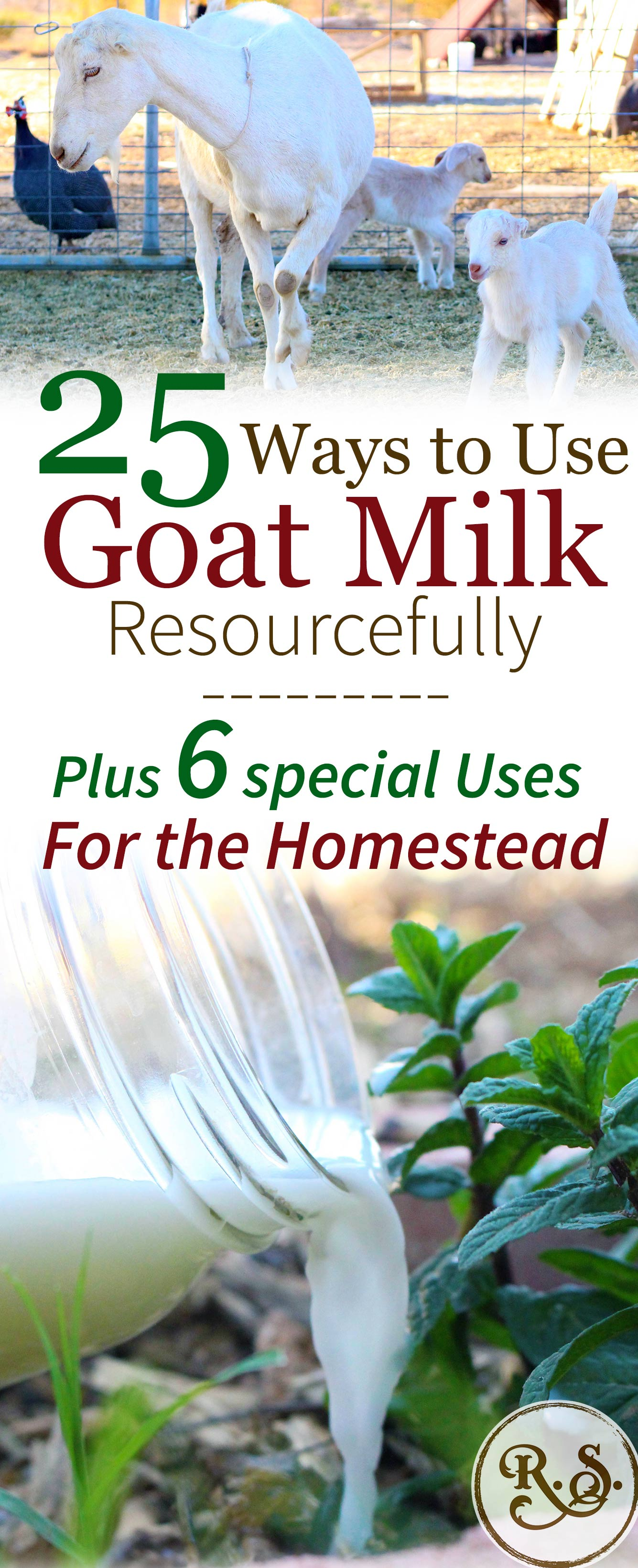 Dairy goat milk is a wonderful resource on the homestead. Once you start milking goats you'll have times when you have way more milk than your family can drink!