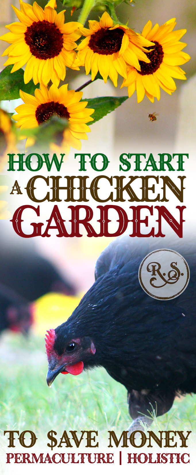 Learn how to grow a sustainable garden for your backyard chickens to save money on their feed bill. Plant shrubs, trees & herbs for a permaculture homestead. Great DIY ideas for beginners & beyond.