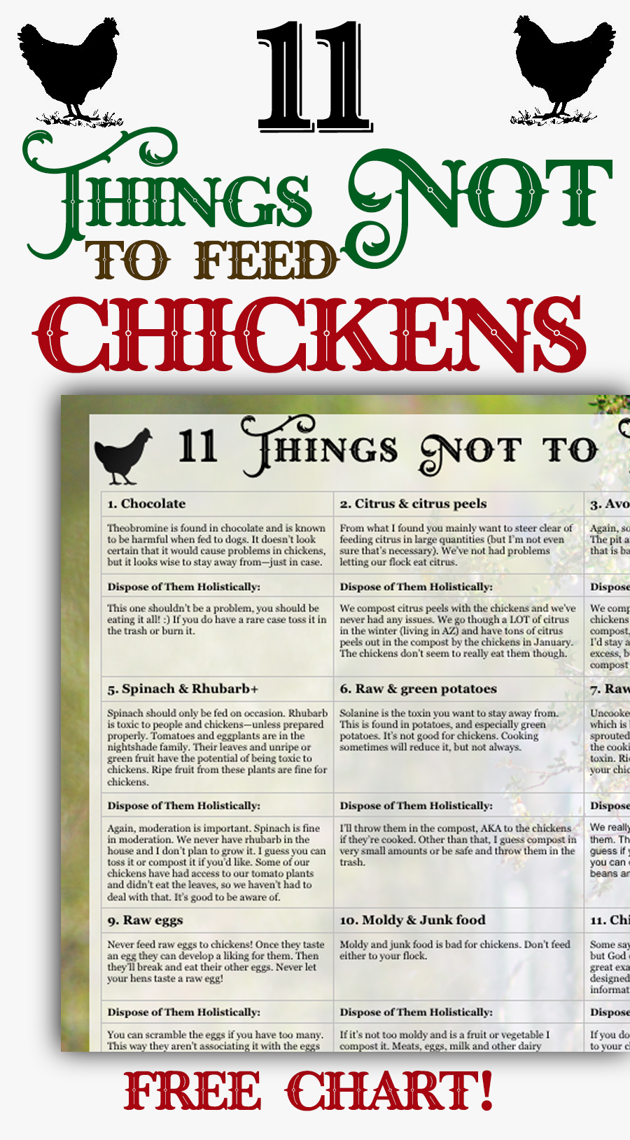 Learn which foods NOT to feed to your chickens with this free downloadable chart! Feeding and raising backyard chickens is easy, but you need to know which foods NOT to feed chickens.