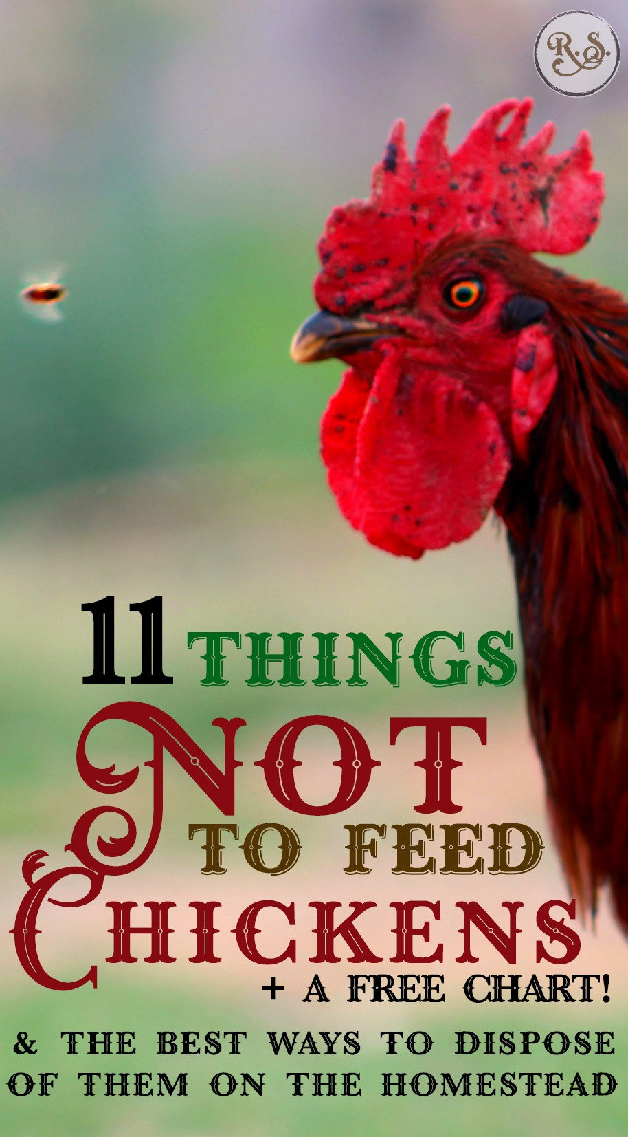 11 Things NOT to Feed Chickens & The Best Way to Dispose of Them