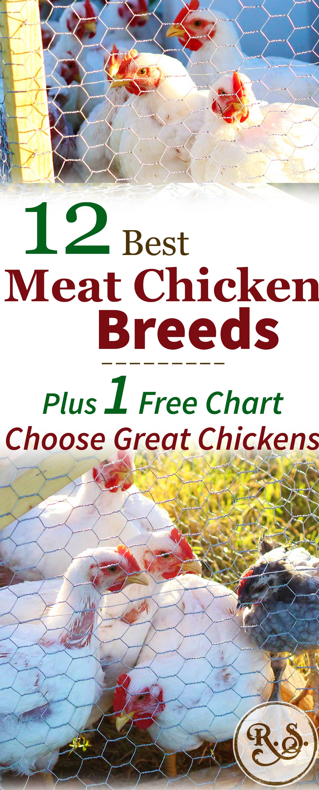 Here are 12 of the best meat chicken breeds for raising on your homestead. A great list for beginners who are looking to raise broilers. Both cross-bred & heritage breeds are compared here.