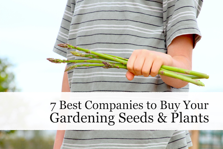 Garden seeds and plants are the most basic and important part of backyard gardening. Check out my seven favorite places to look for seeds, trees, and more. #gardening #seeds