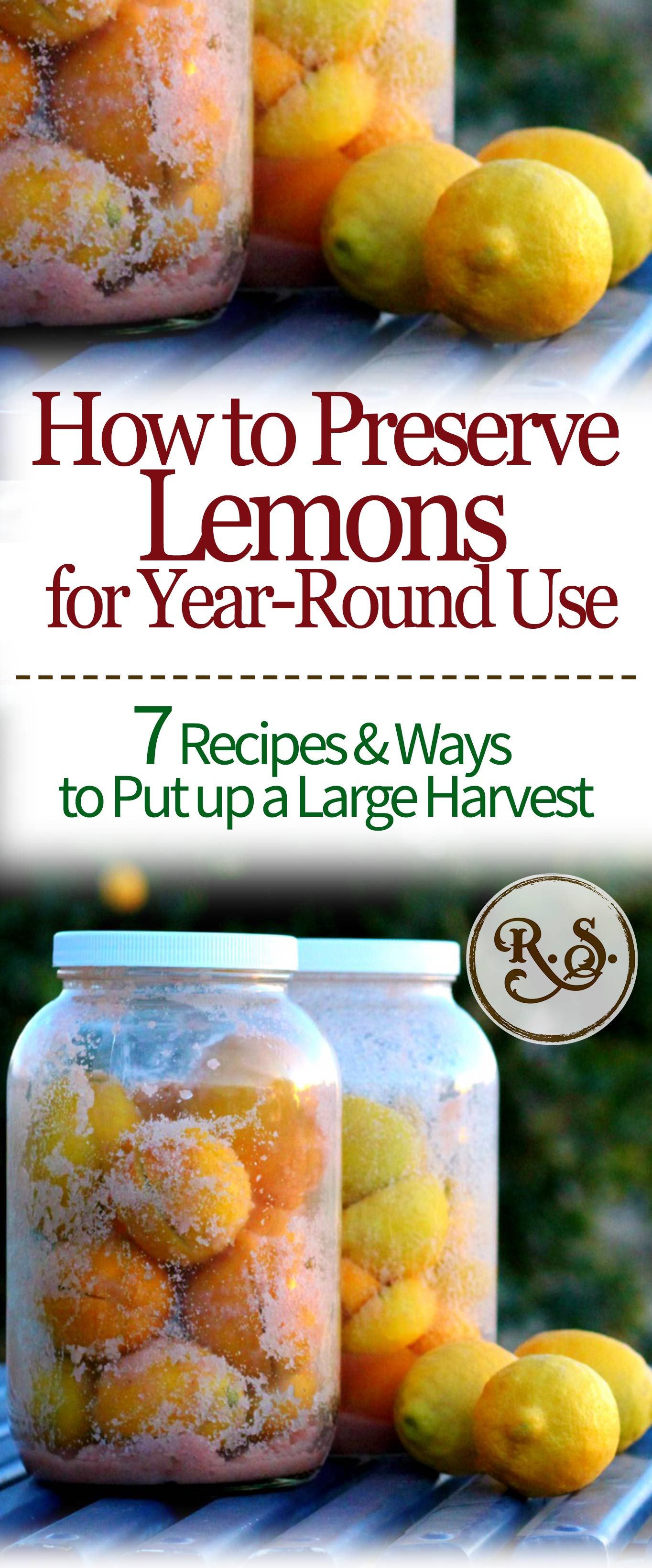 Learn how to preserve a large lemon harvest. You can ferment dehydrate, pack in salt, freeze, and more! Here are the 7 best ways and recipes I've found for putting up lemons for great uses later.