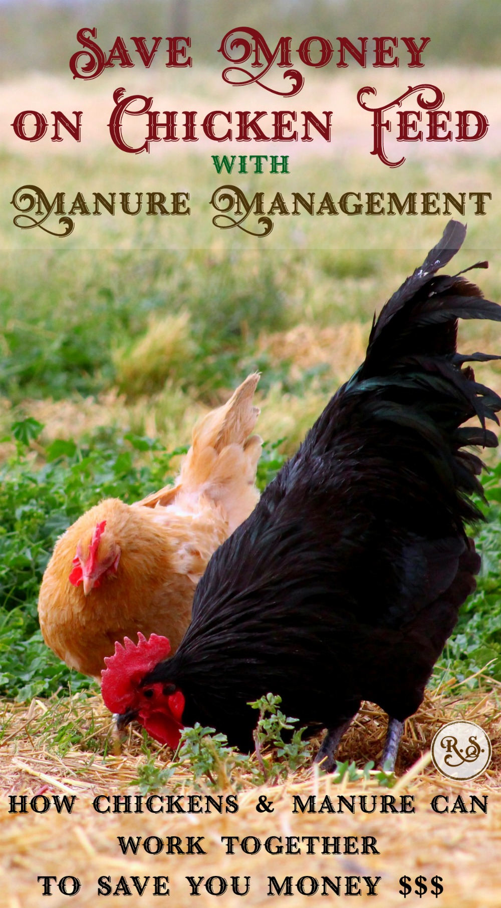 Save money on chicken feed with these easy manure management tips. Free food for the chickens--bugs, compost, worms, etc, ready for you to utilize. Health-promoting & easy DIY ideas for your backyard.