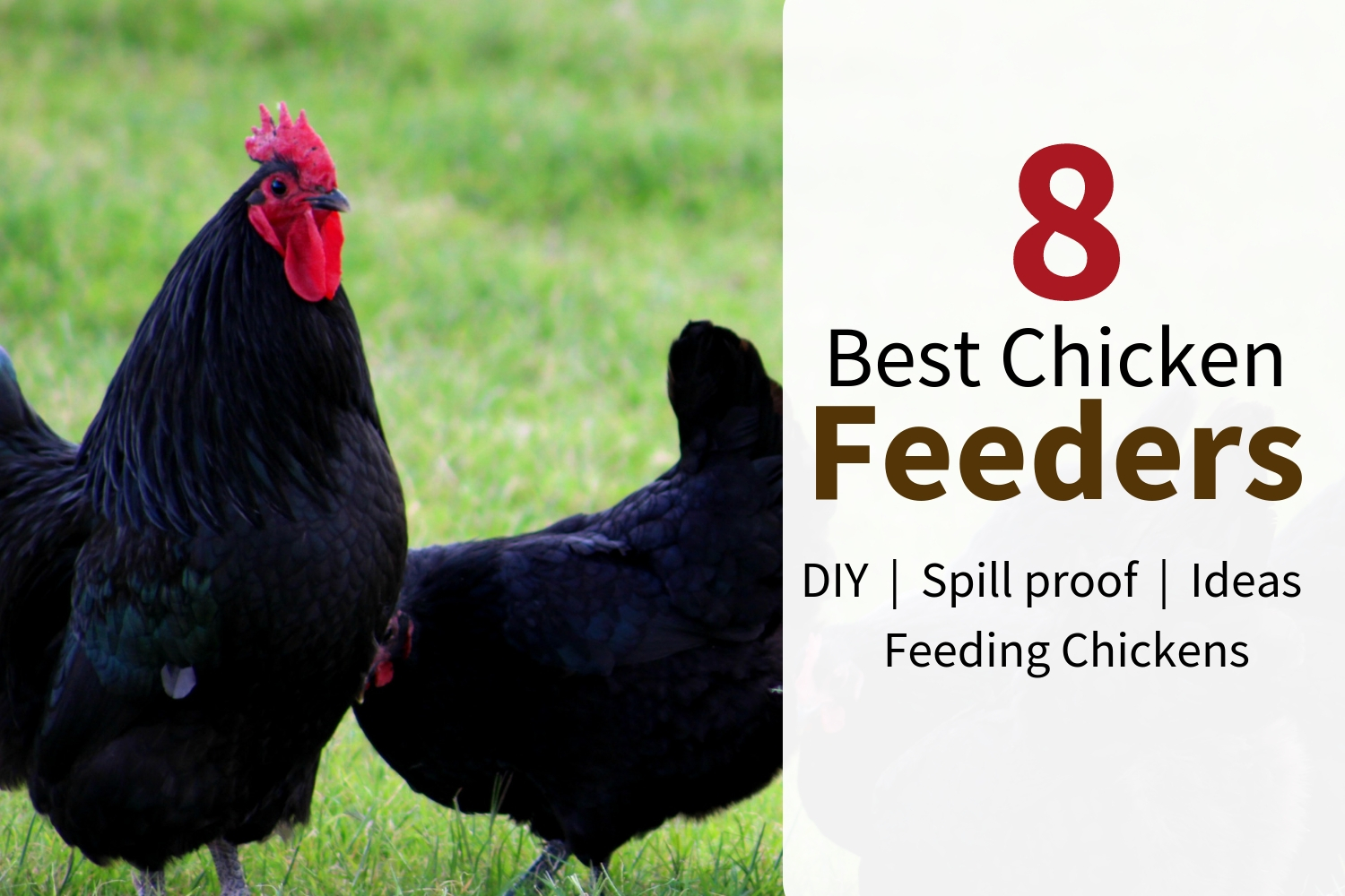 Feeding backyard chickens is always nicer with a custom DIY feeder. Check out these 8 best feeder ideas to build your perfect automatic chicken food feeder today! #backyardchickens #feeders #food
