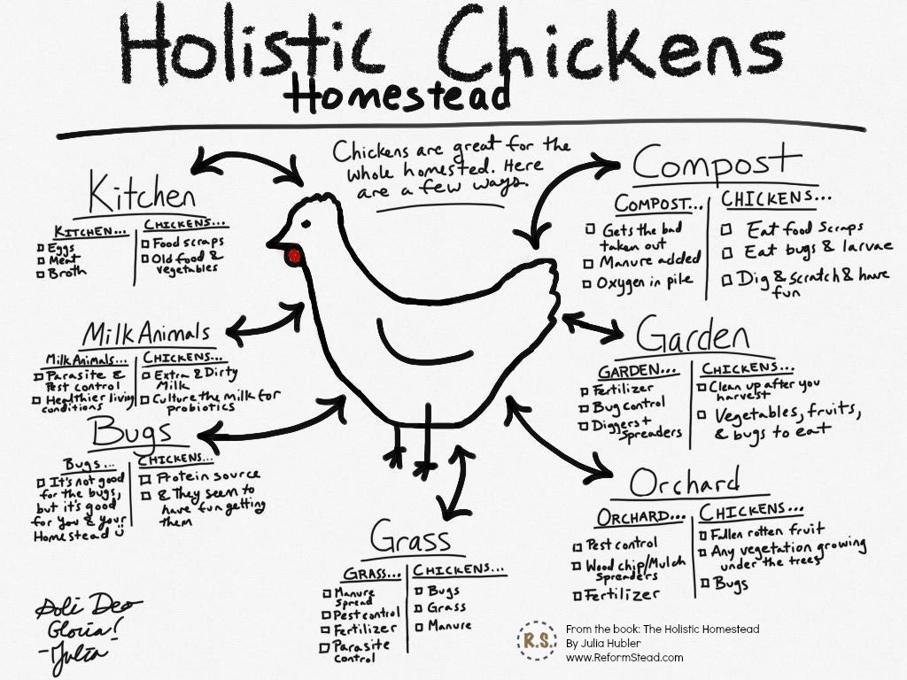I'm writing a book!!! The Holistic Homestead. This book is designed so you SEE your homestead as a orderly system. Instead of aimlessness, it's how-to homestead with purpose!
