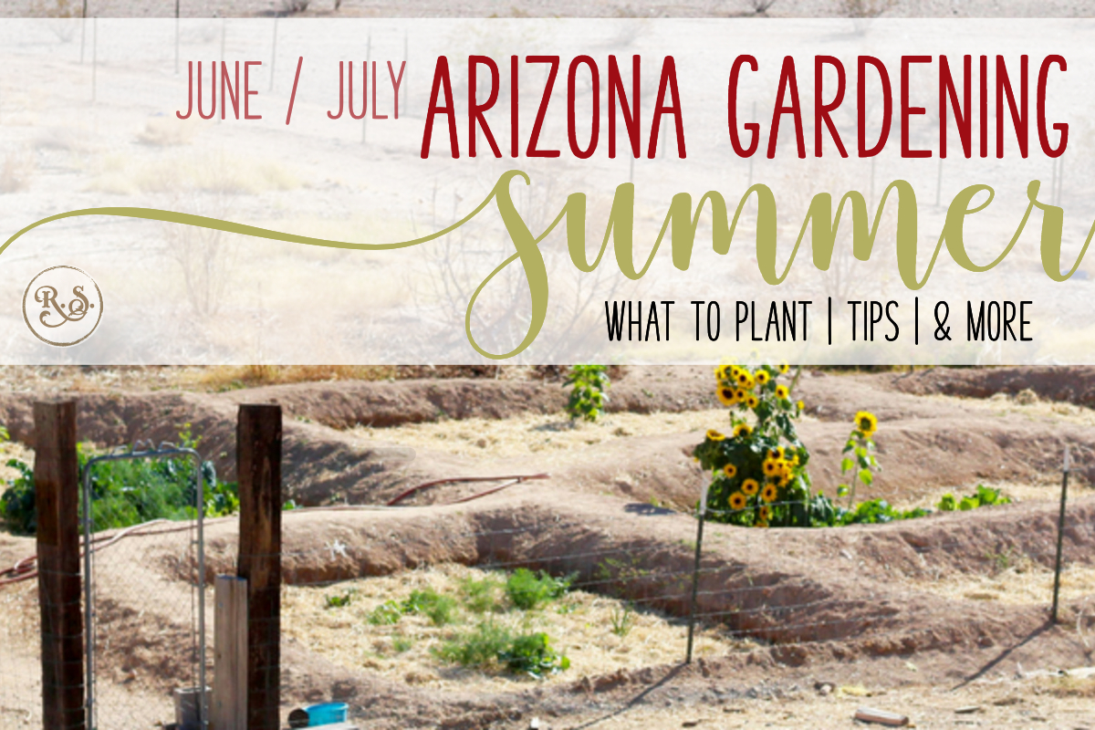 Desert gardening in the summers is a challenge. Arizona's desert is not inviting of lush green veggies. Here's what to do and plant in June and July all of you zone 9, low-desert gardeners.