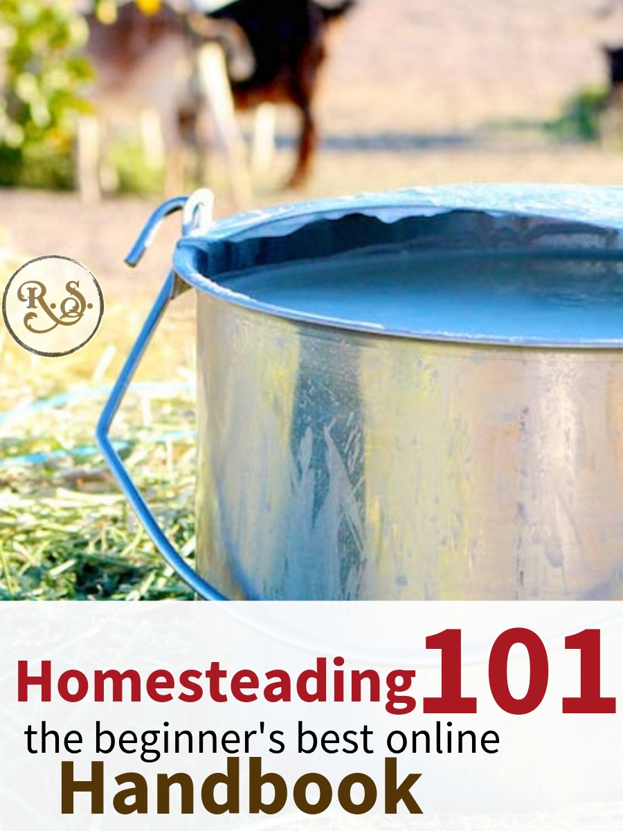 Start backyard homesteading with this quick-start guide for beginners & beyond. Turn your homestead dreams into reality! #homesteadingforbeginners #homesteading #permaculture #sustainable