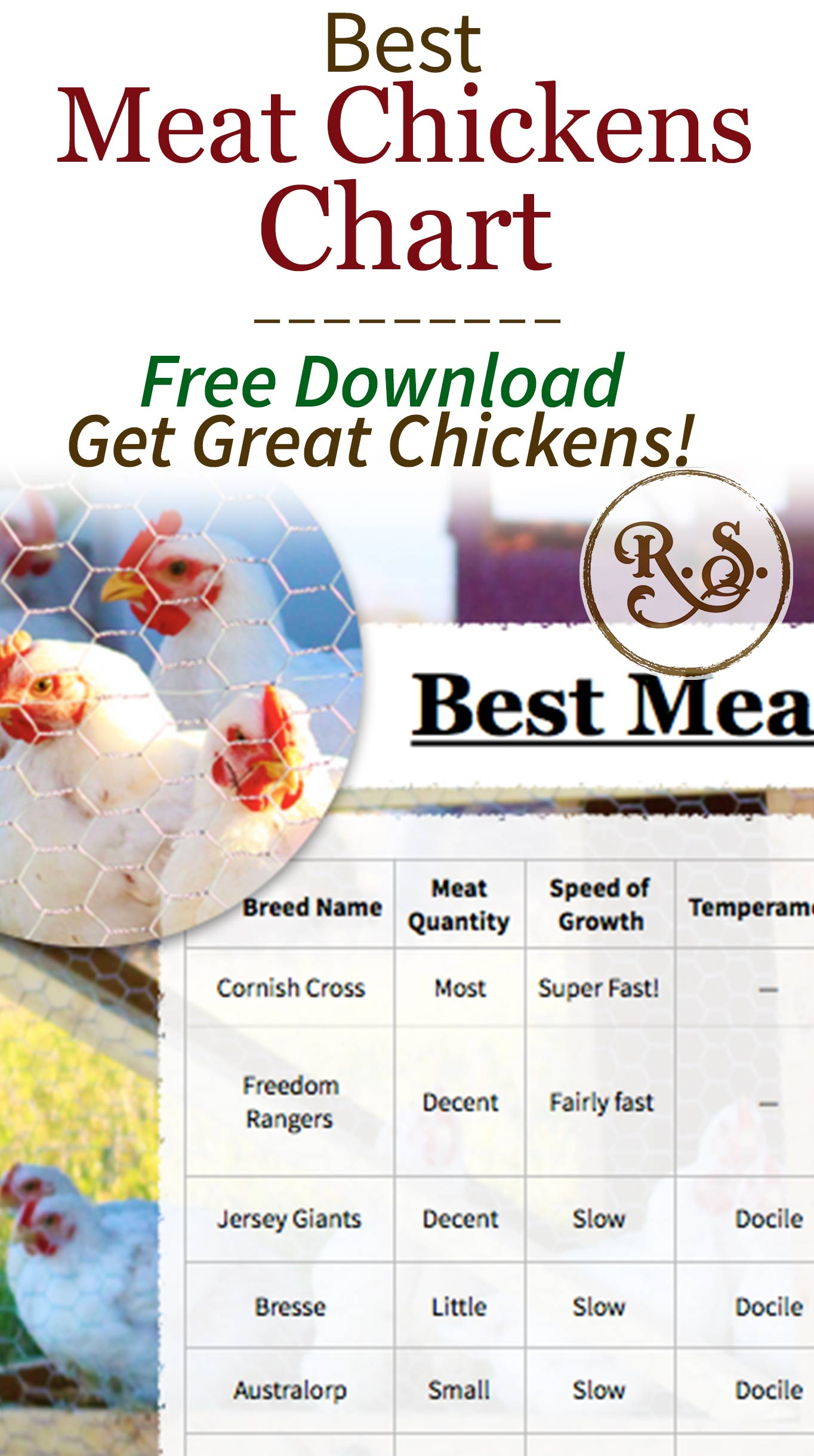 Get your best meat chickens chart! 12 meat chicken breeds which are great for raising on your homestead. Heritage and cross-bred broilers are compared. An instant download you can print out now.