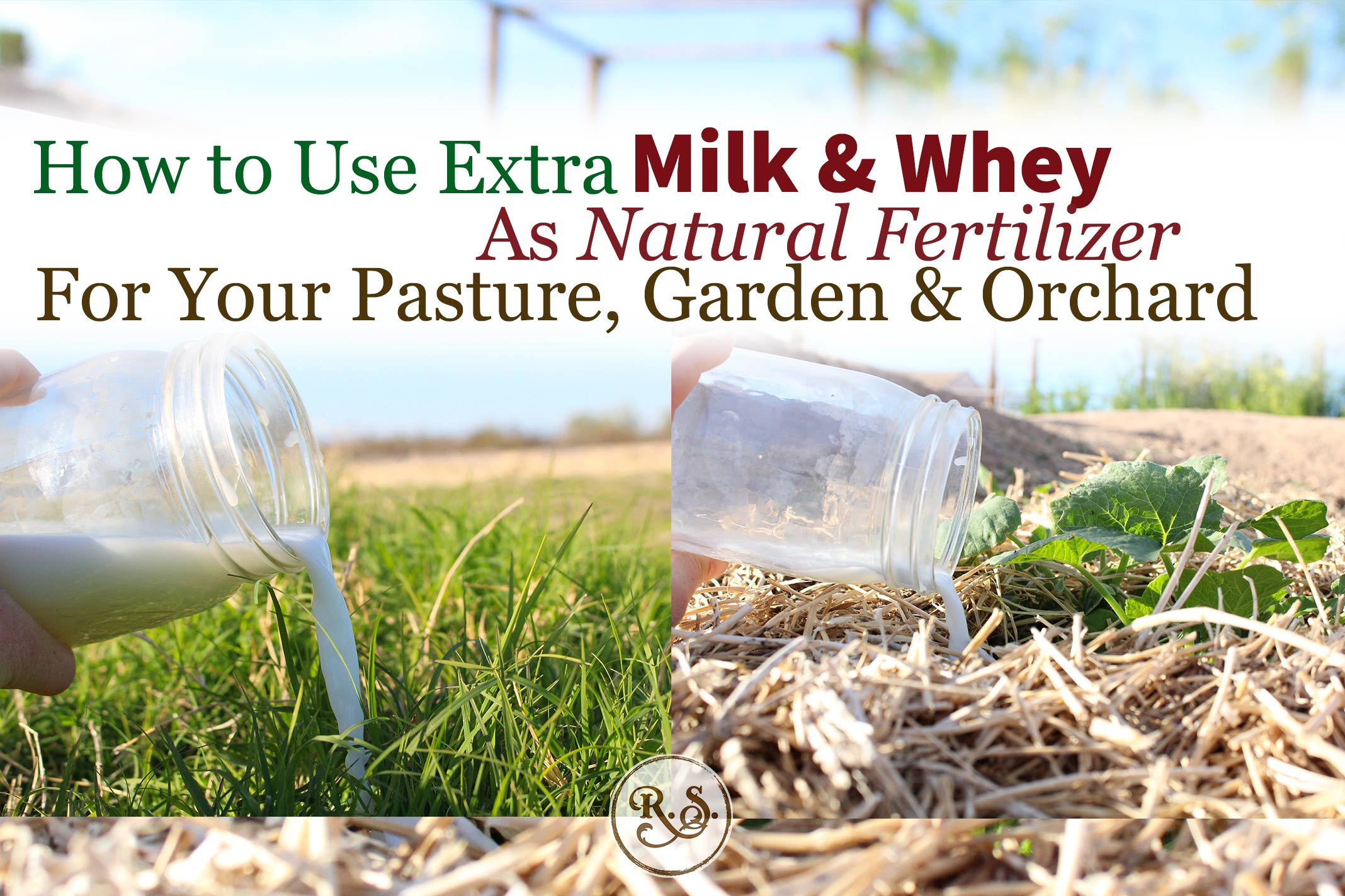 Extra milk or whey is an amazing fertilizer to build Organic fertility! In your orchard, pasture and garden it is a completely natural, holistic and Organic option.