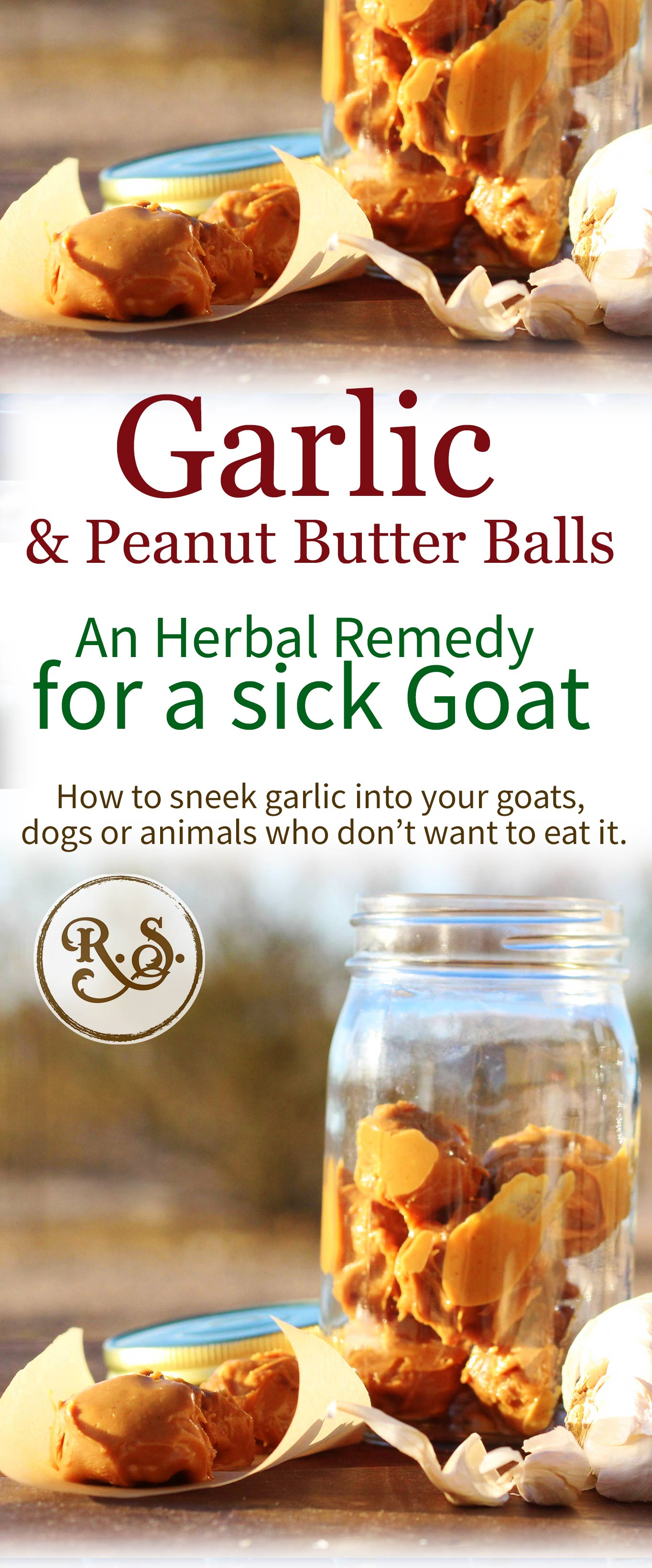 Garlic remedies are the best for a sick goat, dog, chicken, or yourself. Here's a recipe for garlic peanut butter balls for animals who don't like garlic.