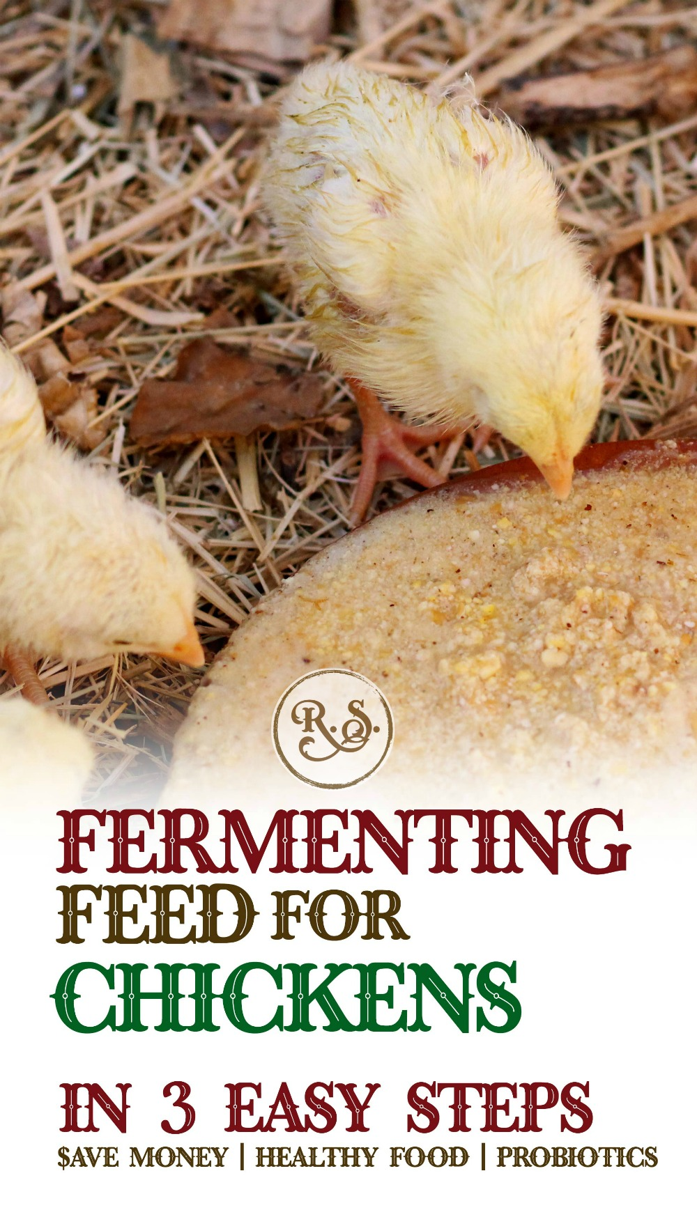 Fermenting chicken feed for your backyard chickens is a great way to save money on their food. Fermented feed can be fed for your hens, baby chicks, egg layers, broilers or meat chickens.