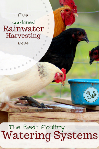 The best DIY poultry watering systems for your chickens. We'll see different poultry waterers and why some are better than others. Then we'll cover rainwater harvesting systems for your flock.
