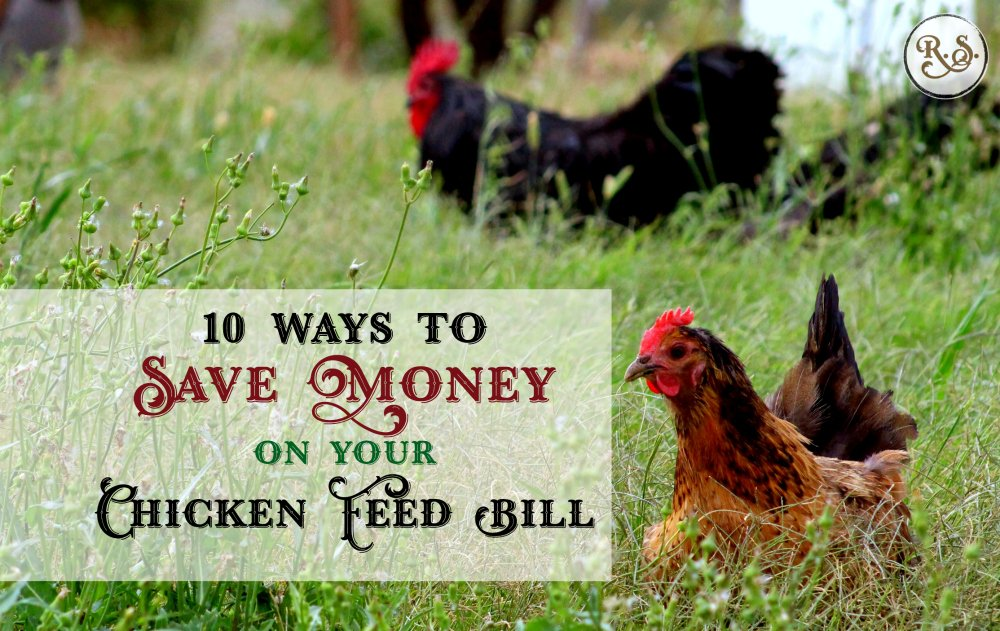 Here are 10 ways you can save money on your chicken food bill. Homesteading for beginners, or anyone who wants to get off the commercial feed bandwagon. Sustainable & DIY ideas for backyard chickens.