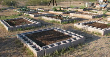 Arizona gardening calls for a permaculture garden design. Vegetable gardening in the desert can be hard, but with the right methods, we live in a great state!