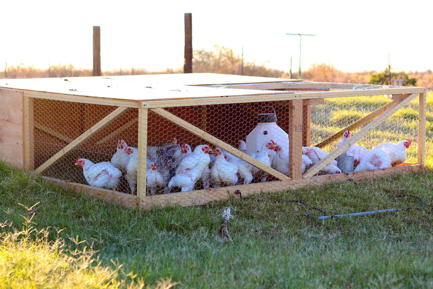 Chicken tractor designs for your meat chickens. Free Dimensions (DIY Plans) with wheels for your broilers moveable and portable coop. For free-range, pastured chickens on grass. Easy to make.